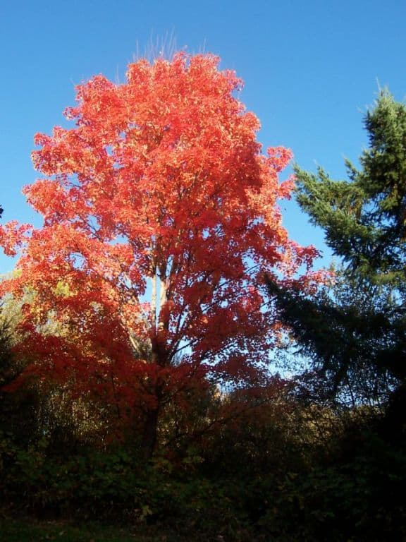 The Prettiest Tree in Greenway Park