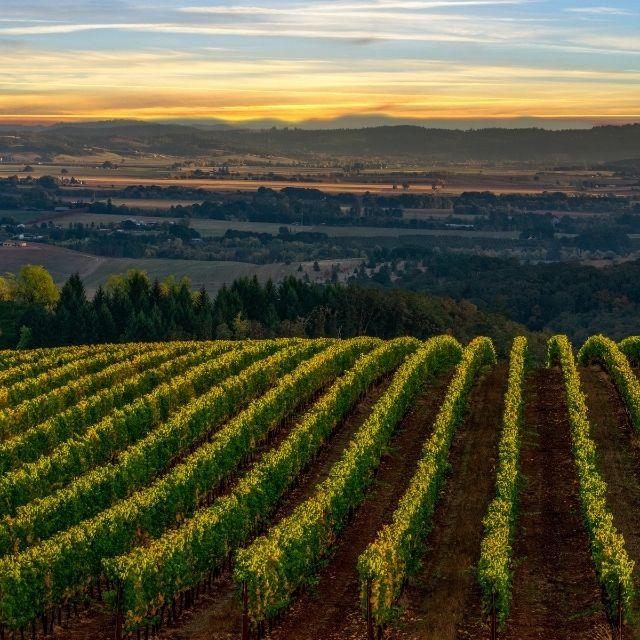 Image of Portland Oregon suburb Wine Country